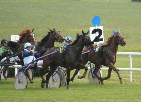 lice trot galop