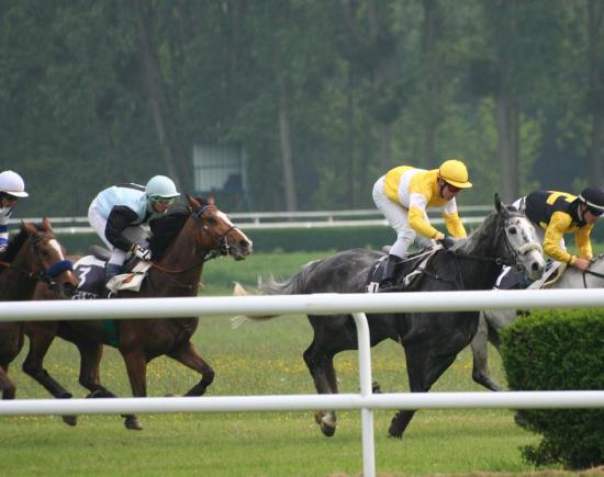 Lice trot galop - Angers